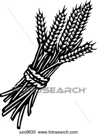 Drawing Of Wheat Black And White Szo0633 Search Clipart