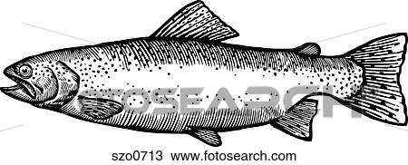 Drawing Of A Black And White Drawing Of A Rainbow Trout Szo0713