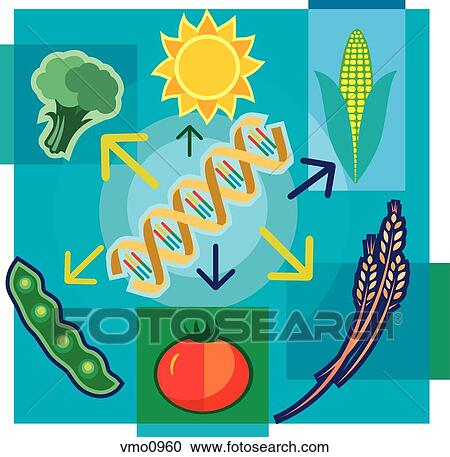 Montage illustration about genetically modified food containing DNA, sun,  vegetables and wheat Clipart