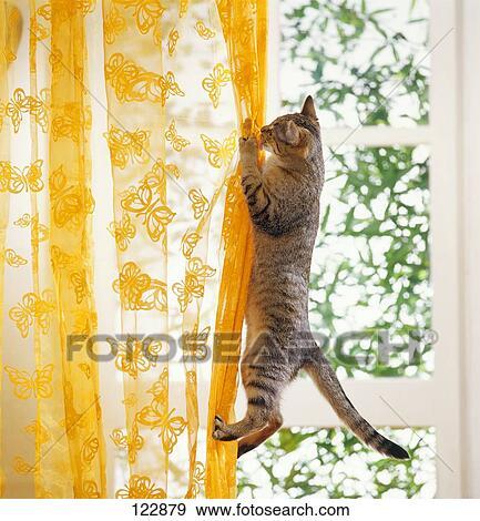 Stock Fotografie - slechte gewoonte, :, huiselijke kat, beklimming ...