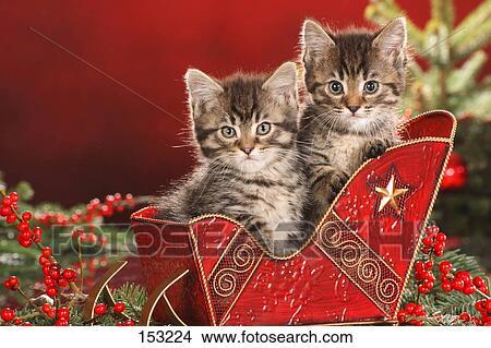 Christmas: two kittens in sledge