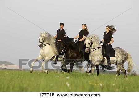 images pur espagnol cheval andalusian et lusitano noir gris chevaux cavalier. Black Bedroom Furniture Sets. Home Design Ideas