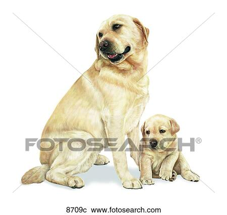 Stock Illustrations Of Labrador Retriever Unlabeled 8709c Search