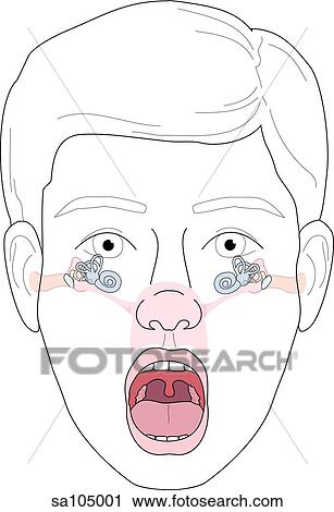 Clipart of Anterior view of head and face of a boy with his mouth ...