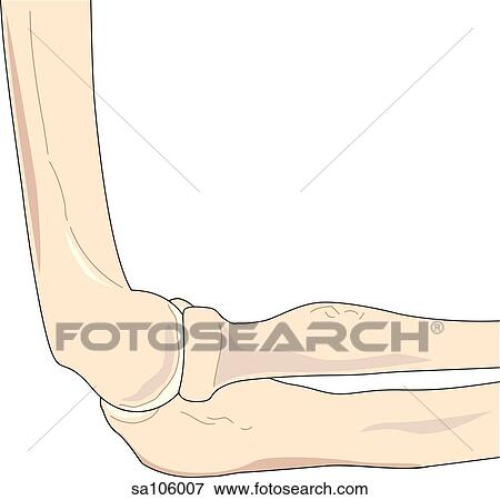 Stock Illustration of Lateral view of the elbow joint showing ...