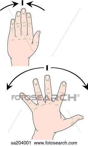 Clipart - dos, imágenes, de, el, externo, anatomía, de, el, mano ...