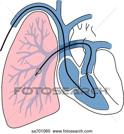 Heart & lung symbol - Download Free Vectors, Clipart Graphics & Vector Art