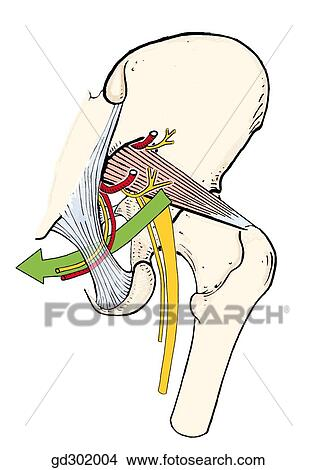 Drawings Of The Green Arrow Together With The Pudendal Nerve And