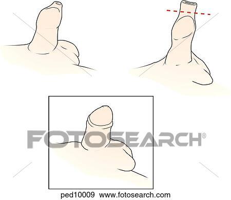 Grande non circumsised pene