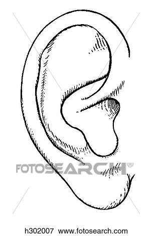 Banque d 39 illustrations oreille externe h302007 - Clipart oreille ...