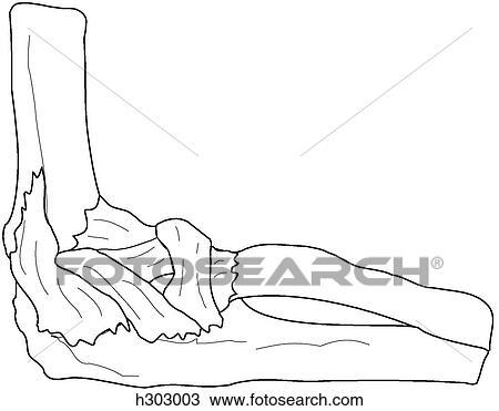 Dibujo - huesos, y, ligamentos, de, codo h303003 - Buscar Clip Art ...