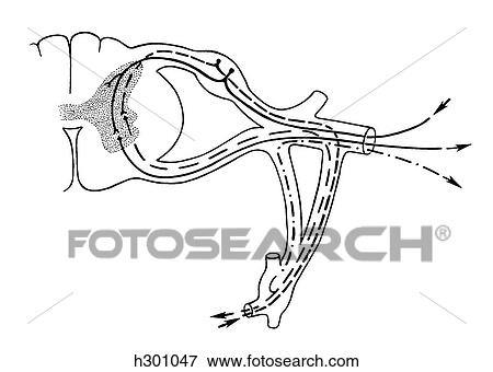Stock Illustration - spinal, nerv h301047 - Suche Clipart ...