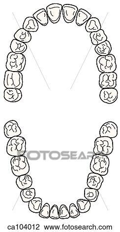 Dentes Permanente Superior E Abaixar Desenho Ca104012