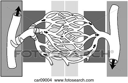 Drawings of Artery, arteriole, capillaries, venules and vein ...