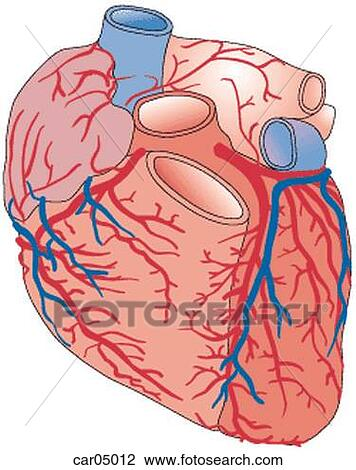Clip Art of Heart showing coronary arteries and right auricle with ...