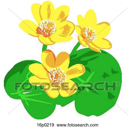 clip art of marsh marigold 16p0219 search clipart illustration rh fotosearch com  marigold flower clipart black and white