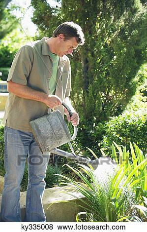 Mature Man Watering Plants In A Garden Stock Photo Ky335008