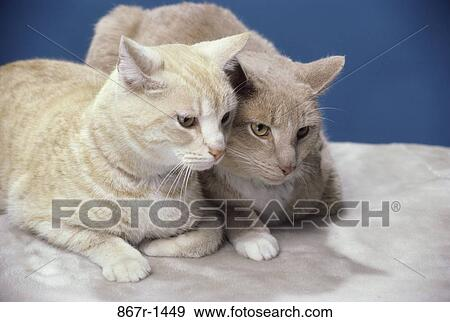 Two cats sitting together Stock Photo