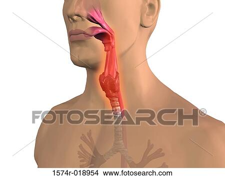 Drawings Of Sore Throat 1574r 018954 Search Clip Art Illustrations