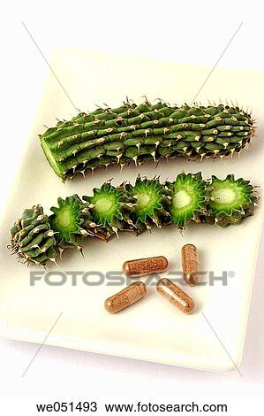 Hoodia Gordonii And Pills The Medicinal Use Of Hoodia Is Long