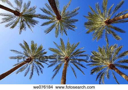 stock photo of ground view of palm trees against clear blue sky las