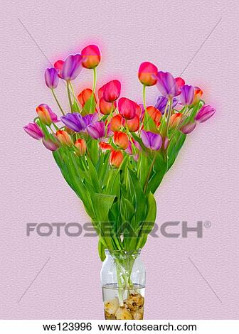 Stock Images Of Tulips In A Transparent Glass Vase Of Water