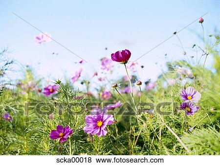 Images Ete Pre Printemps Reveil Fleurs Fleur Pre Champ