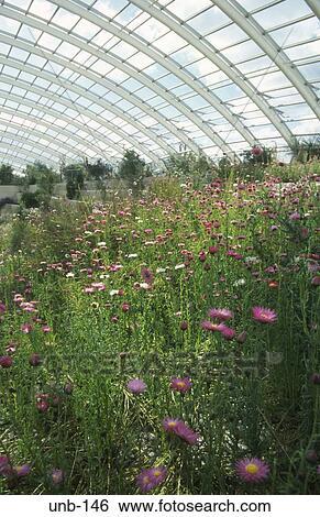 Intérieur, de, les, grand, serre, national, jardins botaniques, galles,  royaume-uni Banque de Photographies