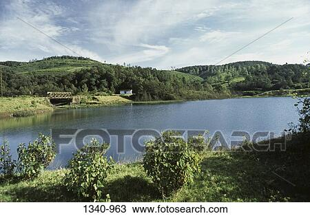 Trees near a lake, Glen Morgan Lake, Nilgiris, Tamil Nadu, India Stock Image