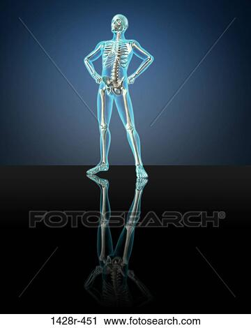 X-ray view of a human skeleton posing Stock Image