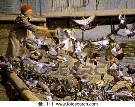 Resultado de imagem para alimentando pombos