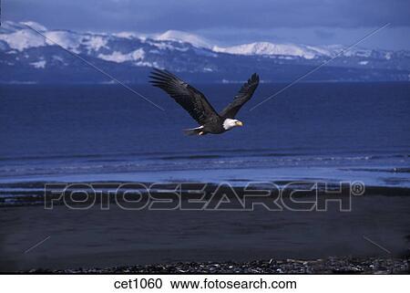 γυναίκα με μεγάλο πουλί