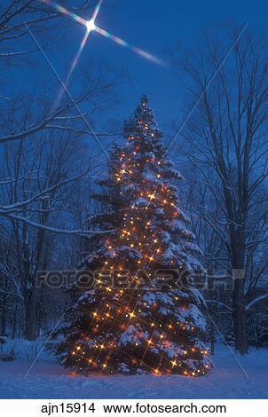 stock photo of christmas tree outdoor tree starlight decorations holiday snow winter a large outdoor christmas tree is decorated with colorful