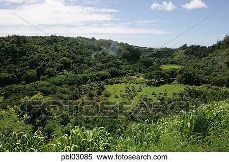 Stock Image of McBryde Garden, National Tropical Botanical Gardens ...