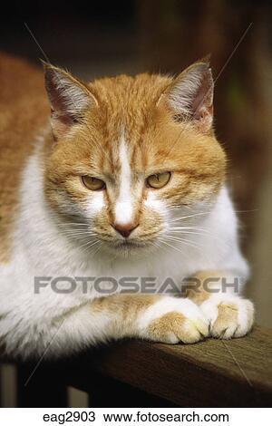 A chat maison observe monde depuis en haut a barrière balustrade