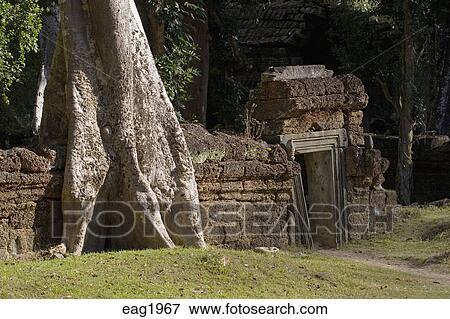 Wat Is Kapok.A Silk Cotton Or Kapok Tree Ceiba Pentandra Grows Over A