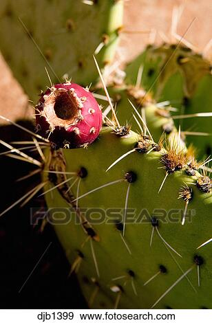 Banque De Photographies Cactus Et Cactus Fleur Rouge Close Up