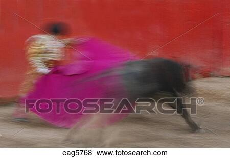 bc908cd2305 A MATADOR and bull are poetry in motion during a bull fight in the Plaza de  Toros - SAN MIGUEL DE ALLENDE