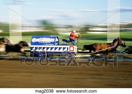 Chuck Wagon Race Action Calgary Stampede Alberta Canada