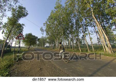 Picture Of Eucalyptus Tree Plantation At Ralegan Siddhi Near Pune
