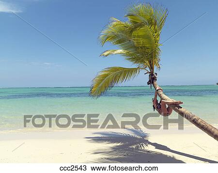 stock photo of dominican republic punta cana bavaro beach palm tree