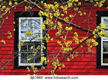 Rote Wand, Mit, Gelbe Blüten, Und, Schwarz, Windows