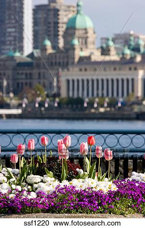 Stock Photography Of Beautiful Spring Flowers In Front Of Parliament
