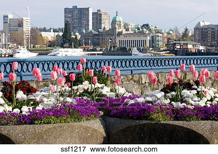 Picture of spring flowers in front of parliament buildings and inner spring flowers in front of parliament buildings and inner harbour victoria bc canada mightylinksfo