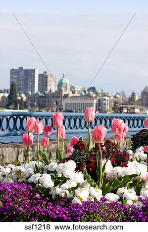 Pictures of spring flowers in front of parliament buildings and spring flowers in front of parliament buildings and inner harbour victoria bc canada mightylinksfo