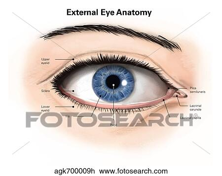 Clip Art Of External Anatomy Of The Human Eye With Labels