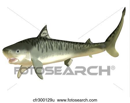 Banque D Illustrations Requin Tigre Cfr300129u Recherche De Clip