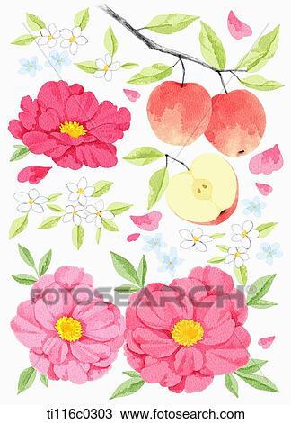 Dessin A Peinture De Camelia Fleur Ti116c0303 Recherchez Des