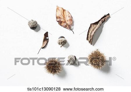 Bilder Herbst Geht Und Eiche Nüsse Und Kastanien Weiß