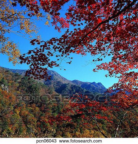 foto de Scène, automne, automne, vue, automne, paysage, automne, montagne ...